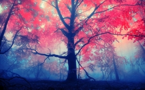 red-leaves-tree_tn2