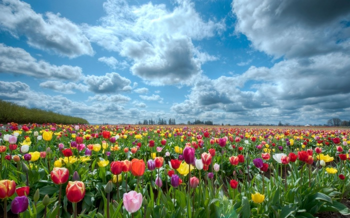 flower-garden-wallpaper-152