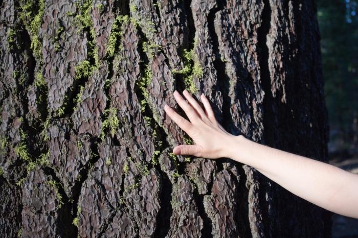 arbre03